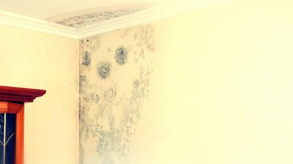 Wasserschaden mit Feuchtigkeit in der Zimmerecke. Zwischen Wand und Decke sind bereits die Folgen der Feuchtigkeit in Form von Schimmel zu sehen.